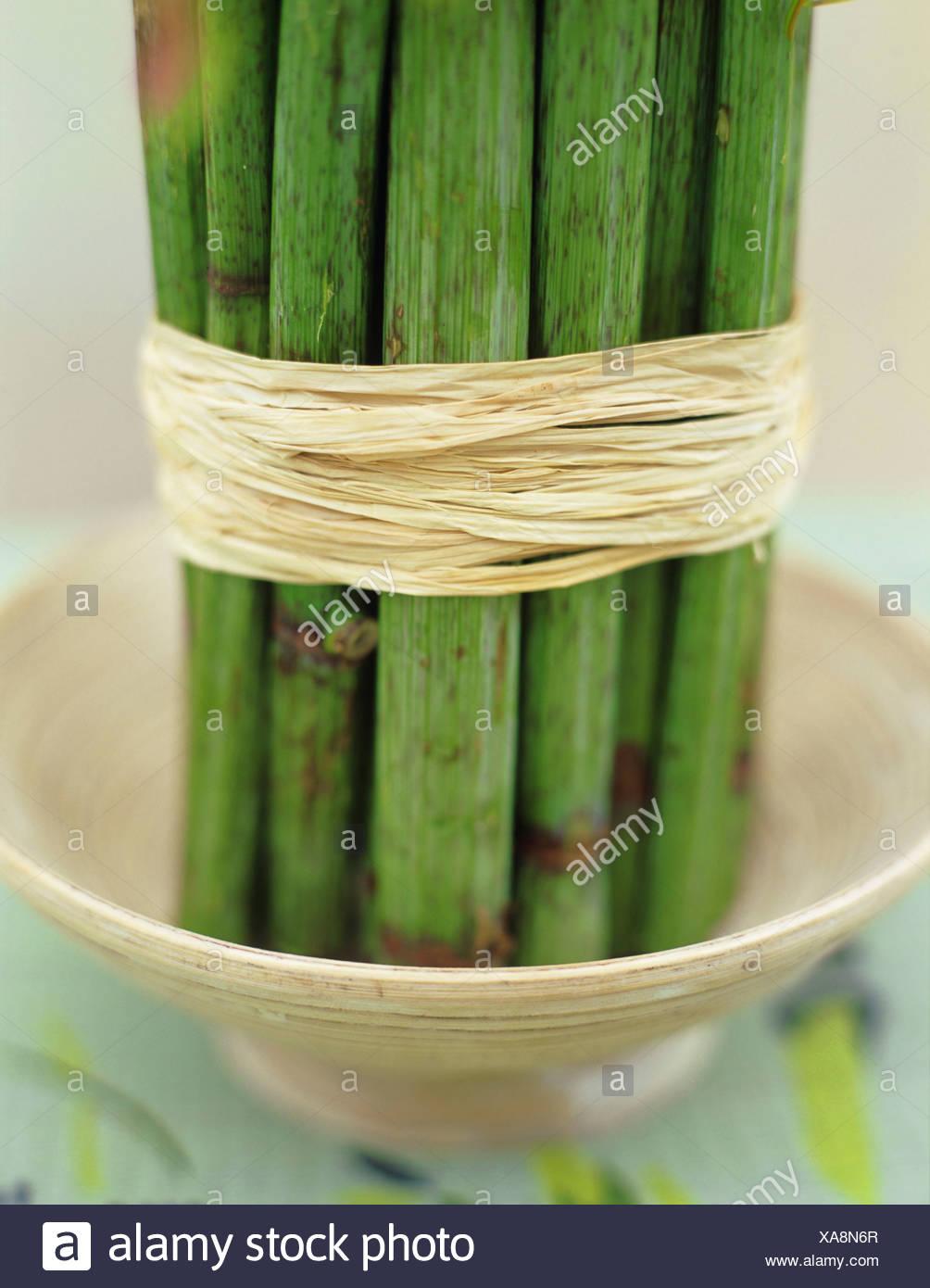 Bamboo (Rheinautria) stem tied up with bast, close-up - Stock Image