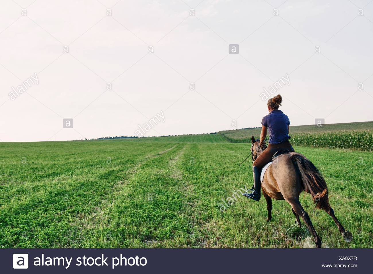 Rear view of woman galloping on bay horse in field - Stock Image
