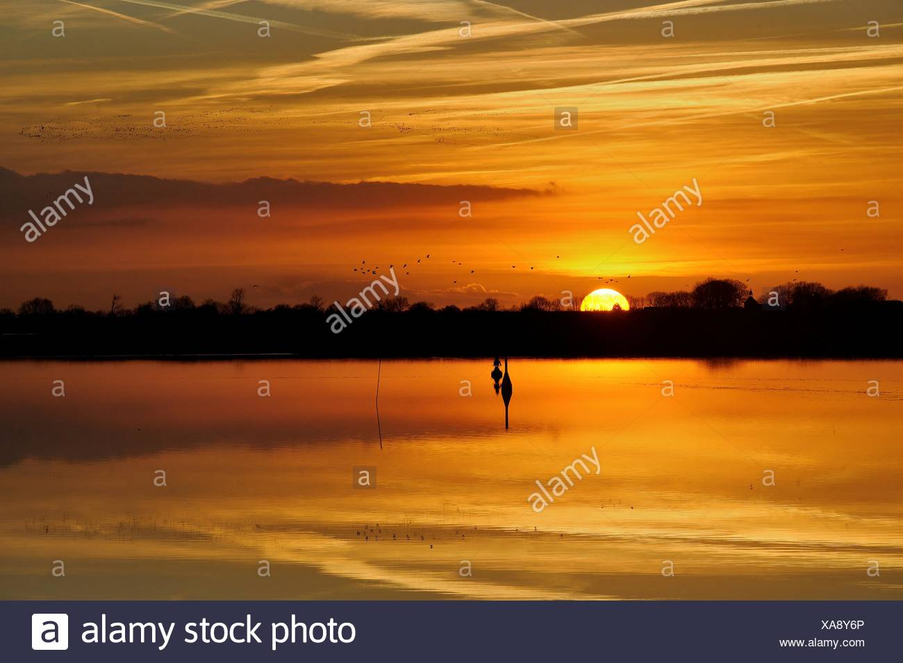 Silhouette of birds flying over river Ems, Leer, Lower Saxony, Germany - Stock Image