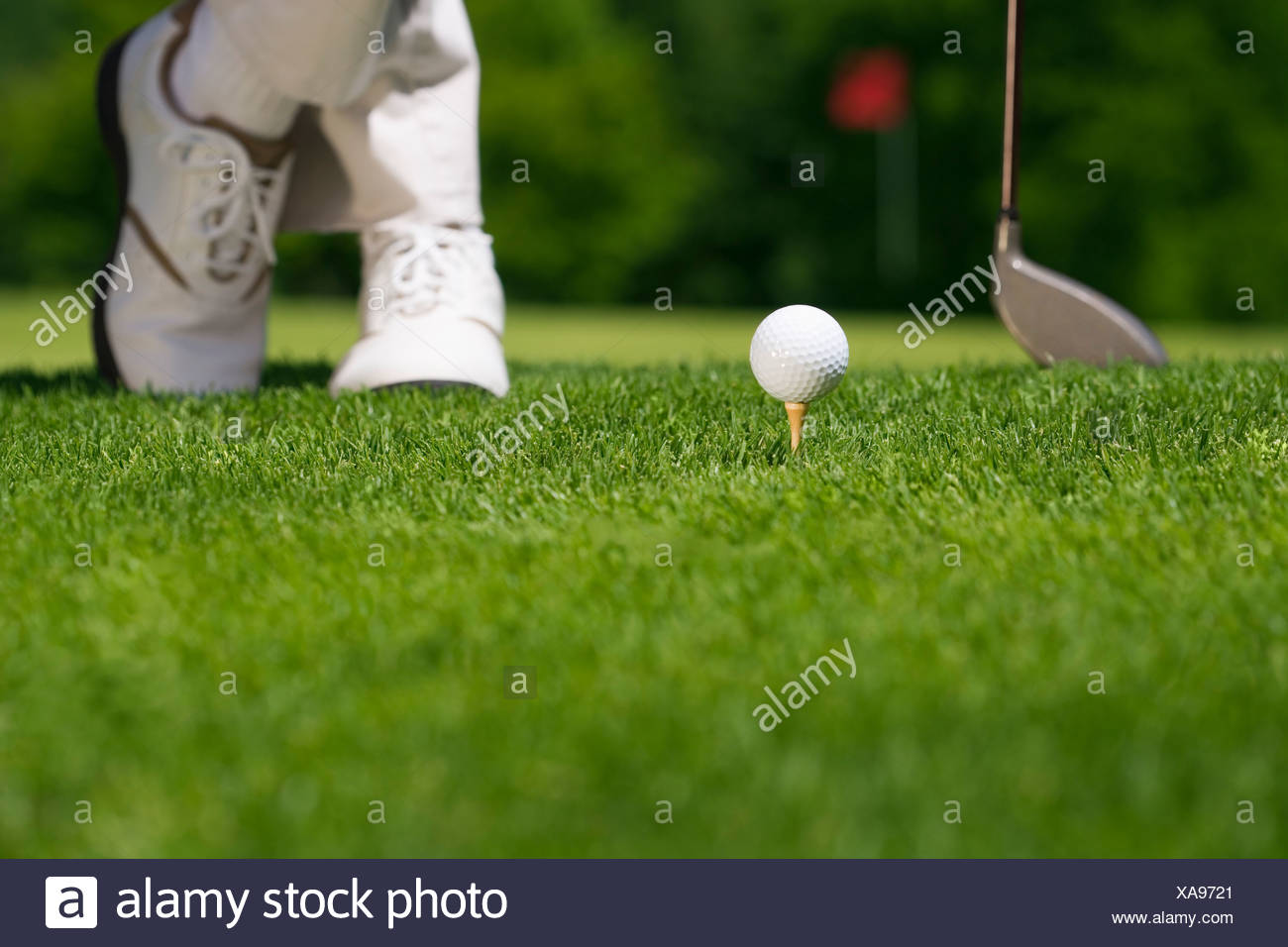 Golfer preparing to tee off - Stock Image