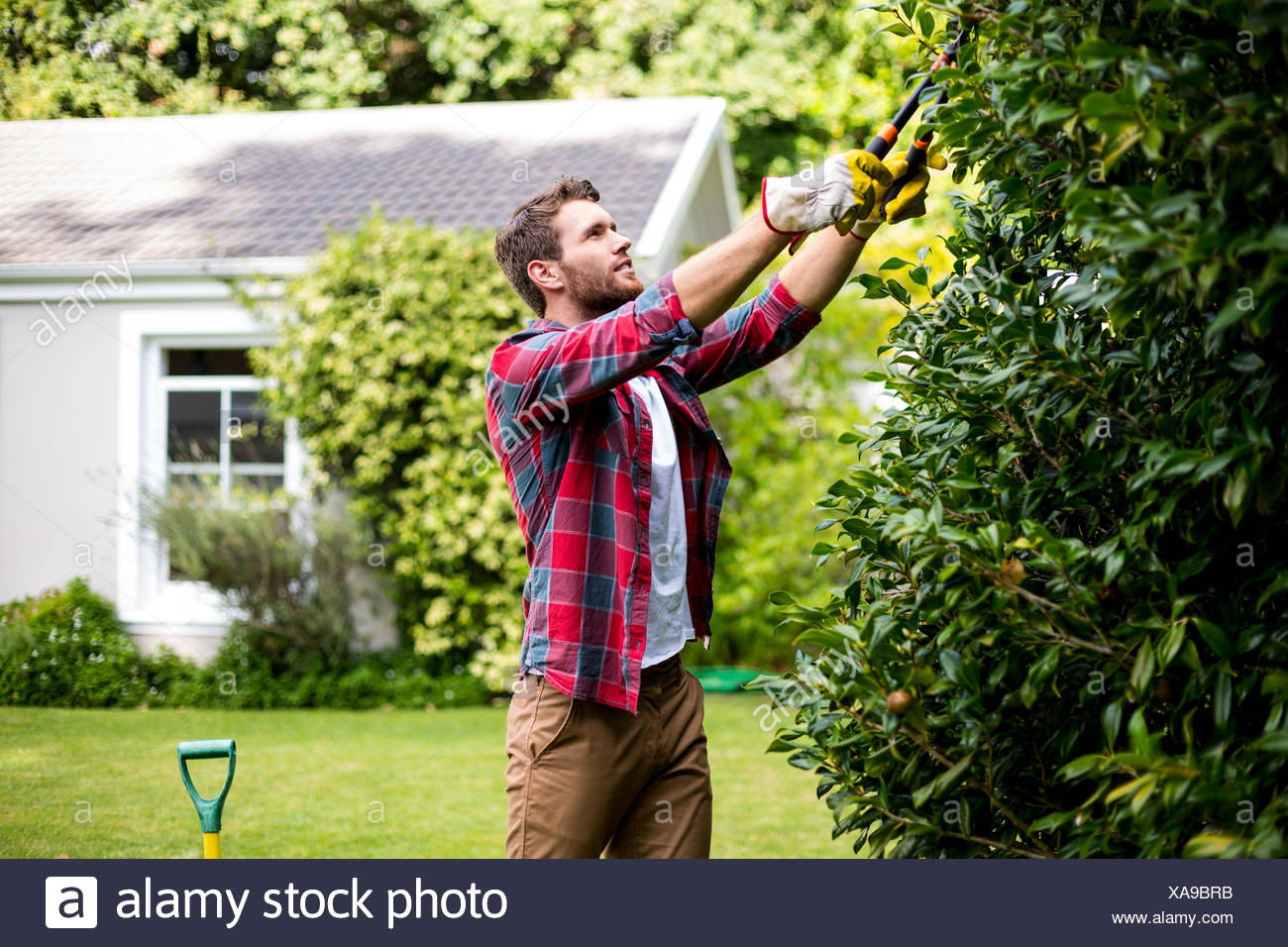 Man trimming plants at yard - Stock Image