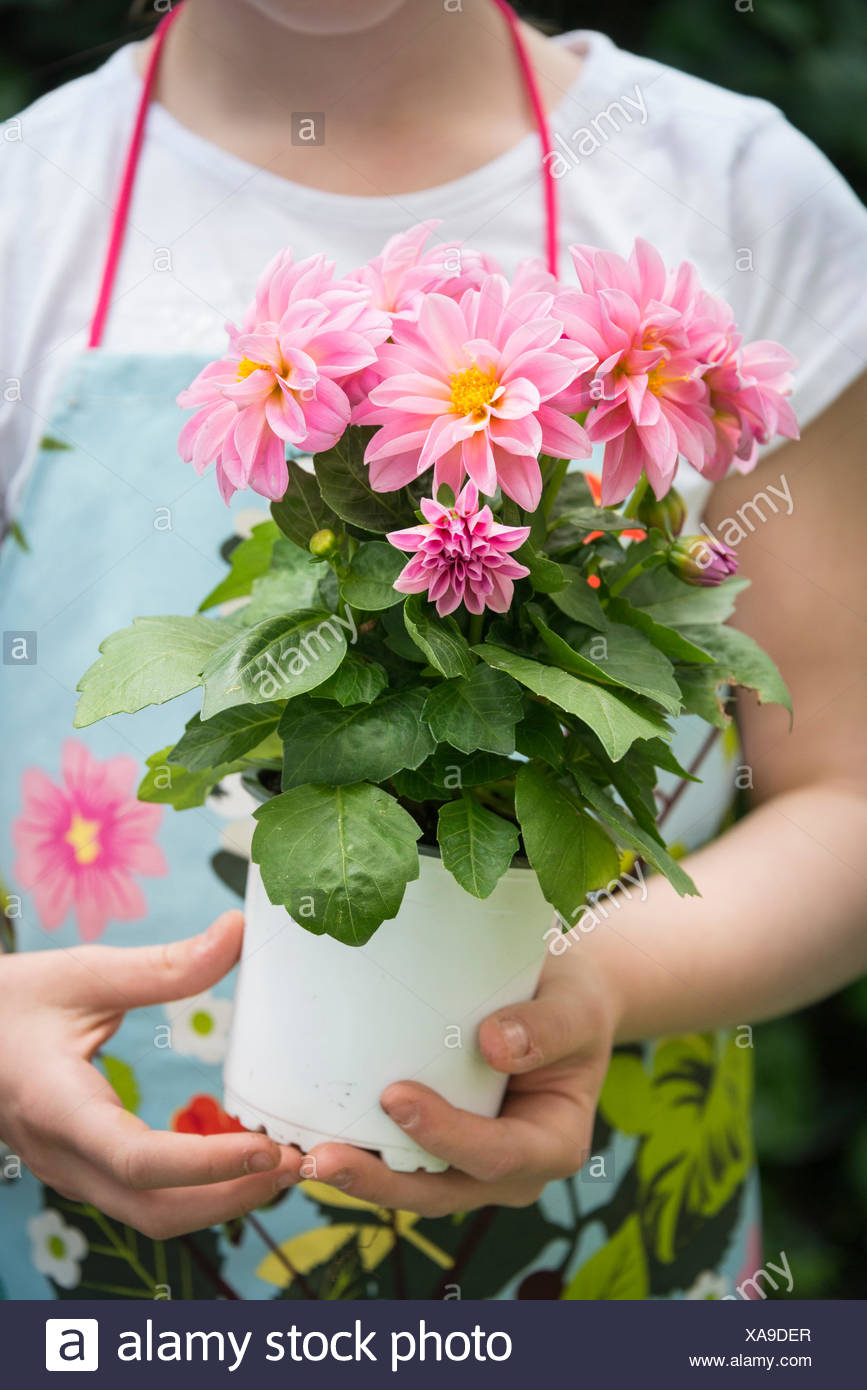 Girl holding pot with flowers in hands - Stock Image