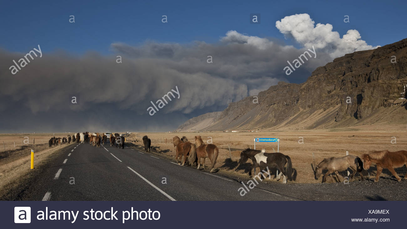 Horses on Highway One with Volcanic Ash Cloud from Eyjafjallajokull Eruption, Iceland - Stock Image