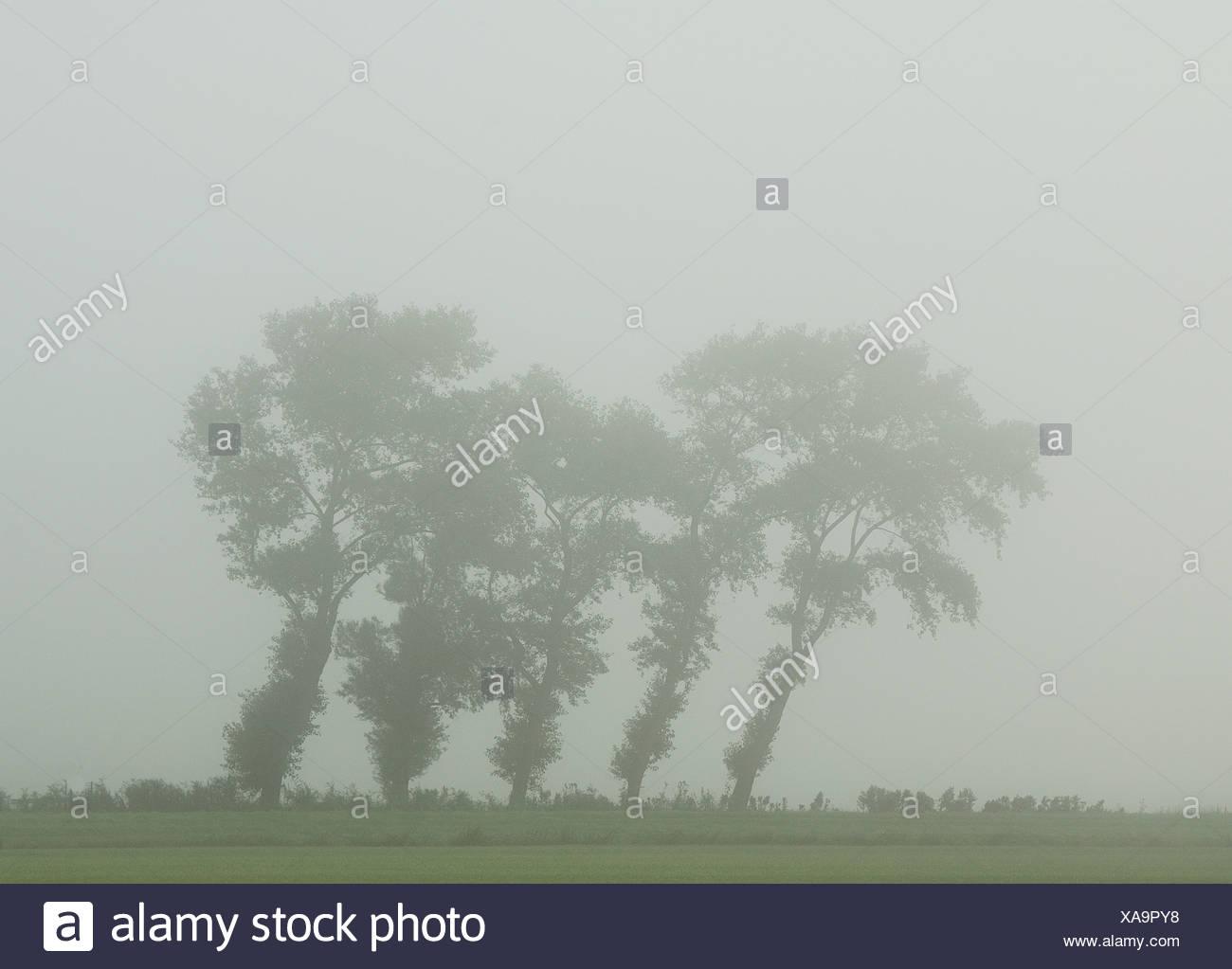 Bomen In De Mist Scheef Gewaaid Door De Wind Trees In The Mist Fog Crooked By The Wind Stock Photo Alamy