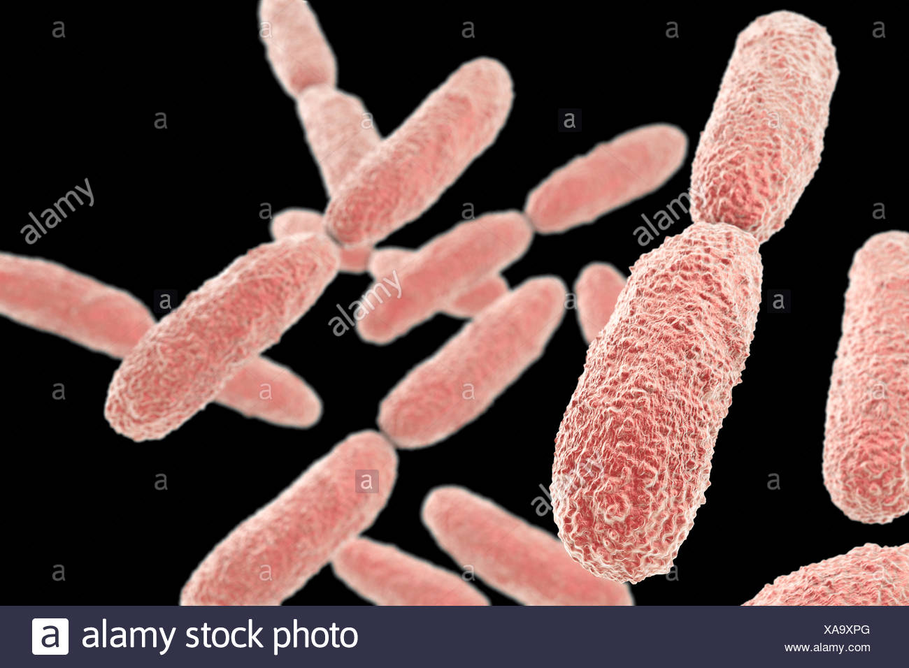 Klebsiella pneumoniae bacteria,computer illustration.K.pneumoniae are Gram-negative,encapsulated,non-motile,enteric,rod-shaped bacteria.This species causes Friedlander's pneumonia urinary tract infections.K.pneumoniae pathogenicity can be attributed to its production of heat-stable enterotoxin.This - Stock Image