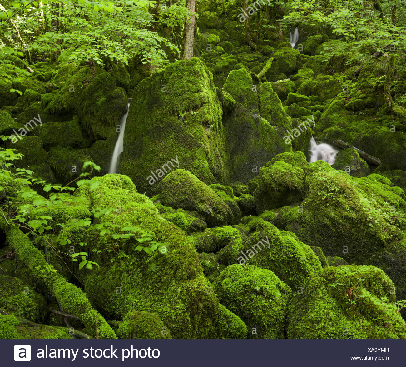 moss-overcast stones, close Arbois, law, France - Stock Image