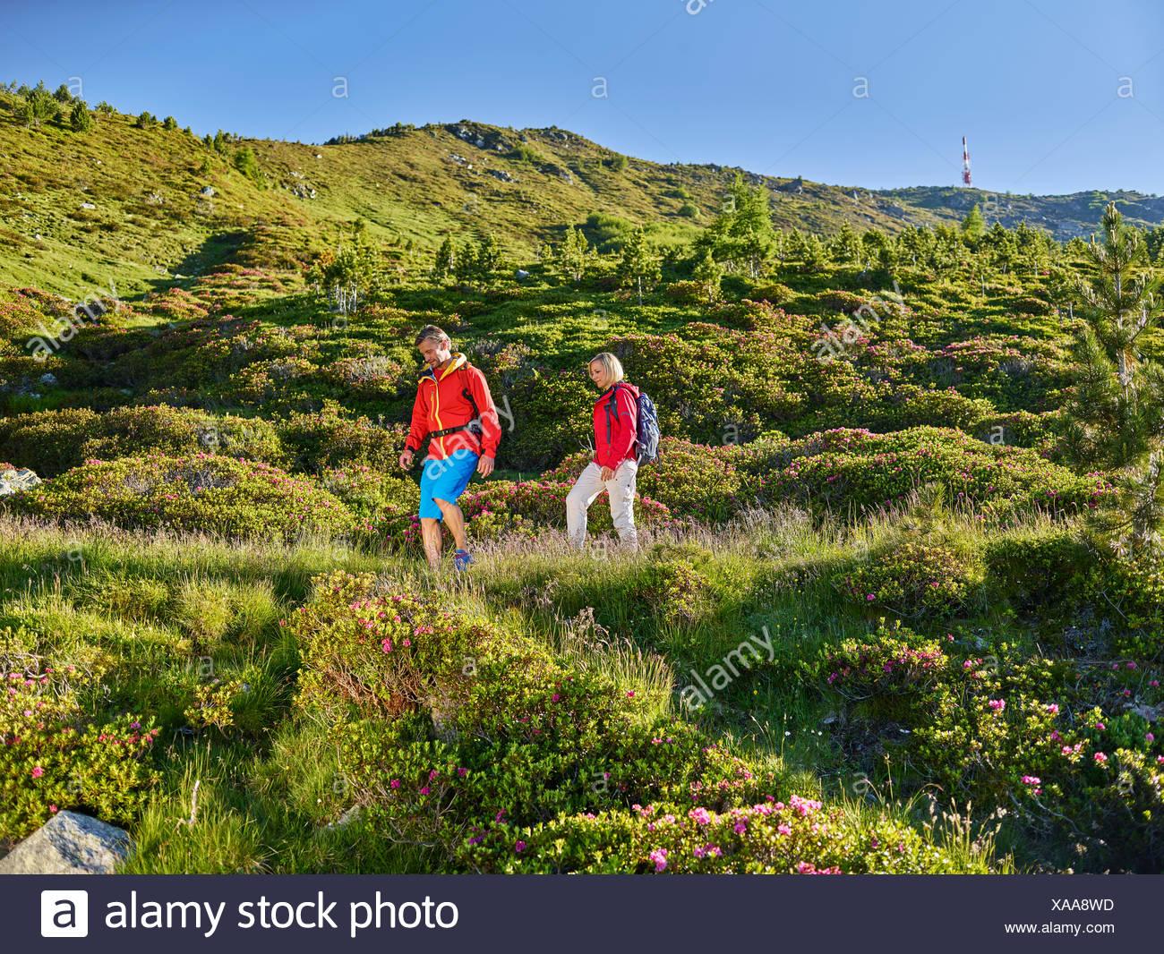 Woman 35-40 years and man 40-45 years hiking, Zirbenweg, Patscherkofel, Innsbruck, Tyrol, Austria - Stock Image
