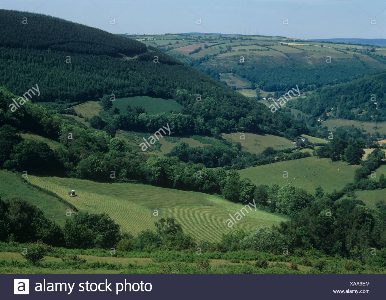 Pasture with tree boundaries, conifer plantations and woodland with tractor mowing, Wales - Stock Image