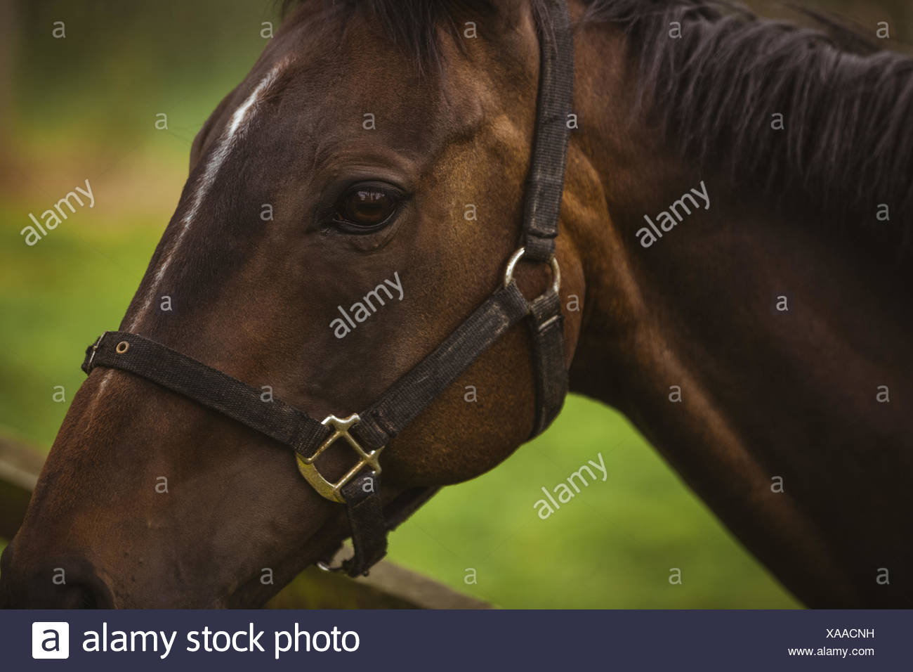 Side view of thorough bred horse - Stock Image