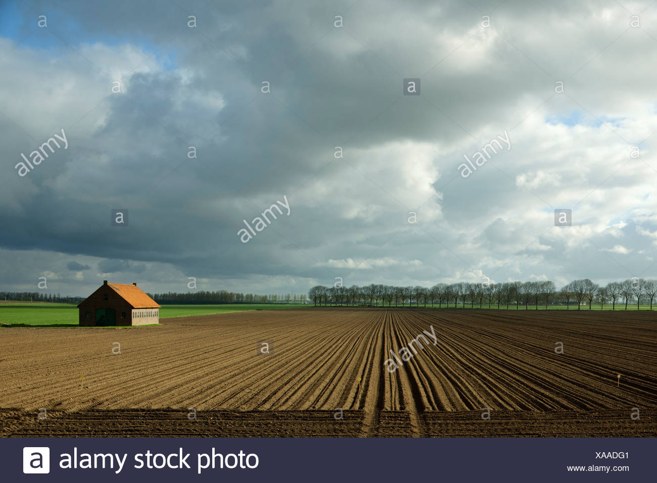Trees growing at edge of dry field - Stock Image