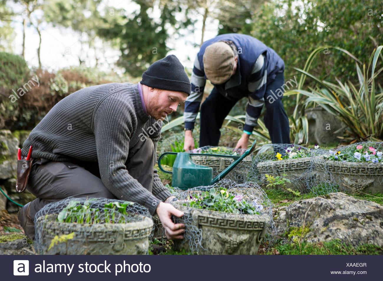 Two men working in garden, Bournemouth, County Dorset, UK, Europe - Stock Image