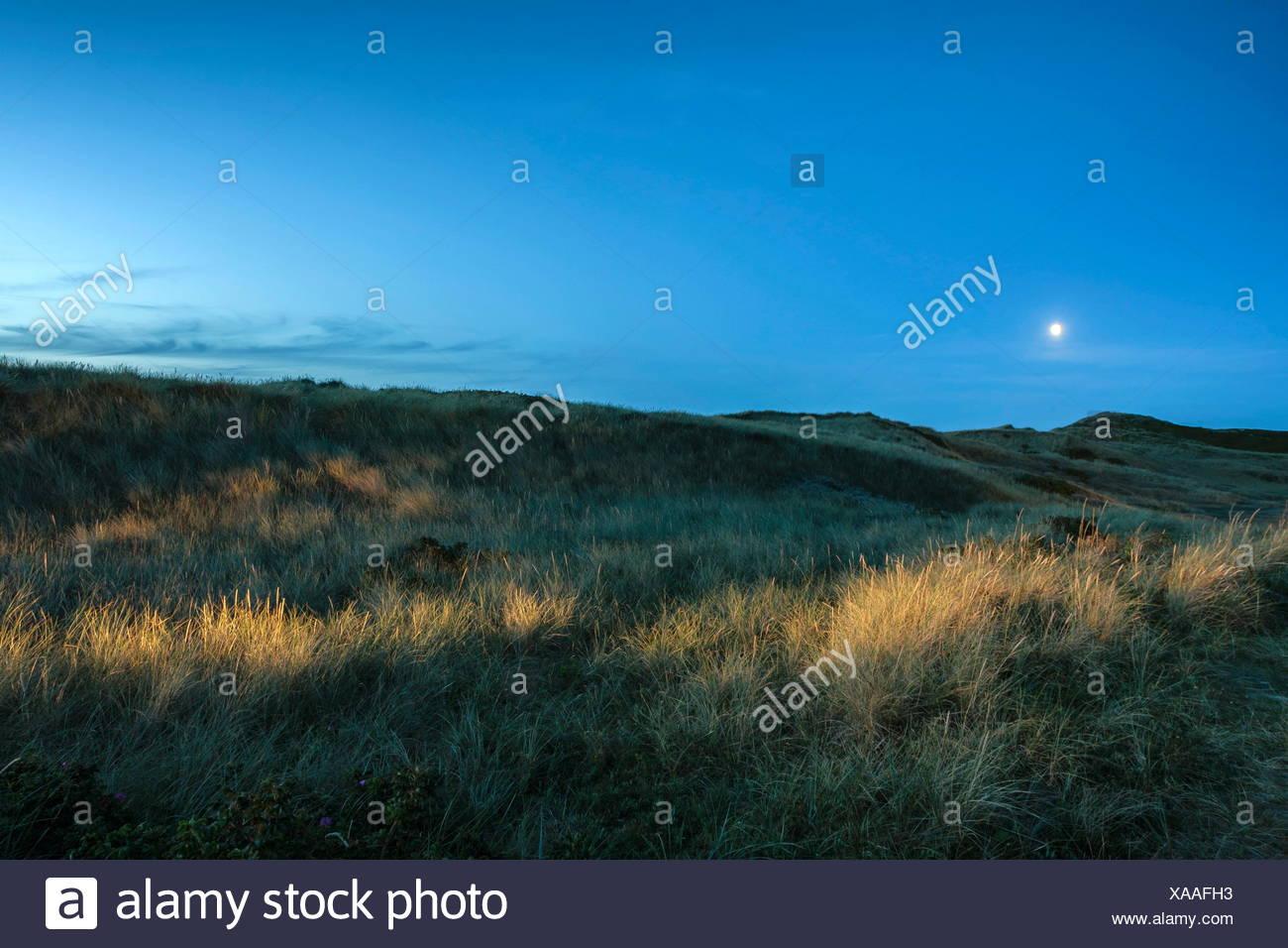 Blaue Stunde in den Dünen - Stock Image