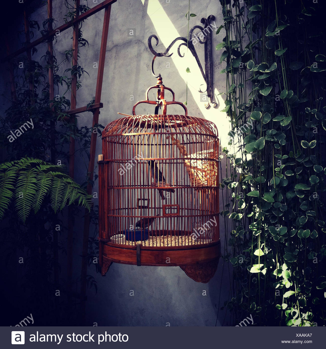 Birds in ornate cage hanging on wall outdoors - Stock Image