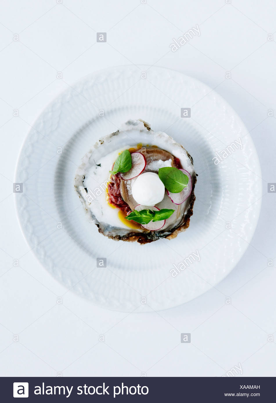 Plate of oysters with radish and herbs - Stock Image