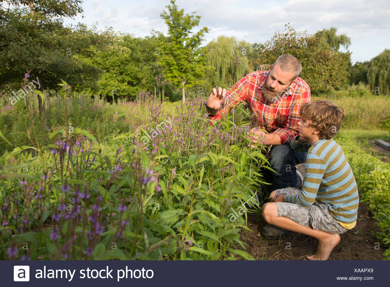 Mature man and son looking at plants on herb farm - Stock Image