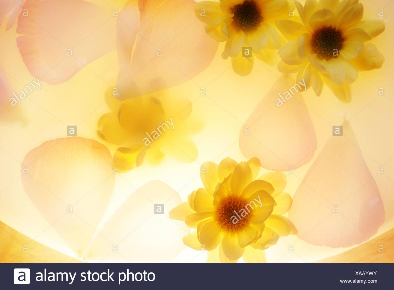 petals - Stock Image