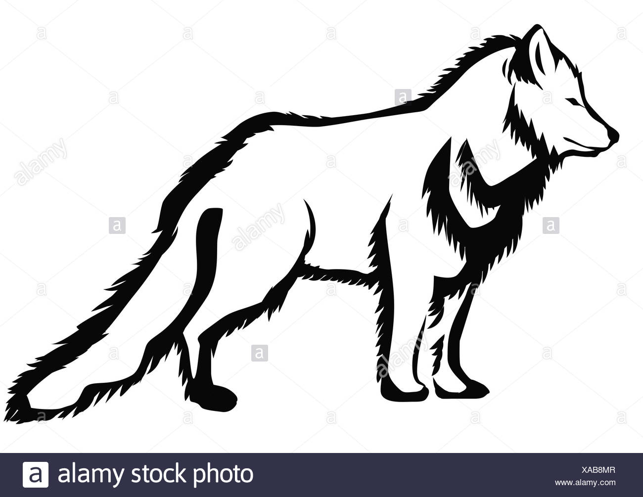 How to draw arctic fox in stages How to draw fox in pencil in stages