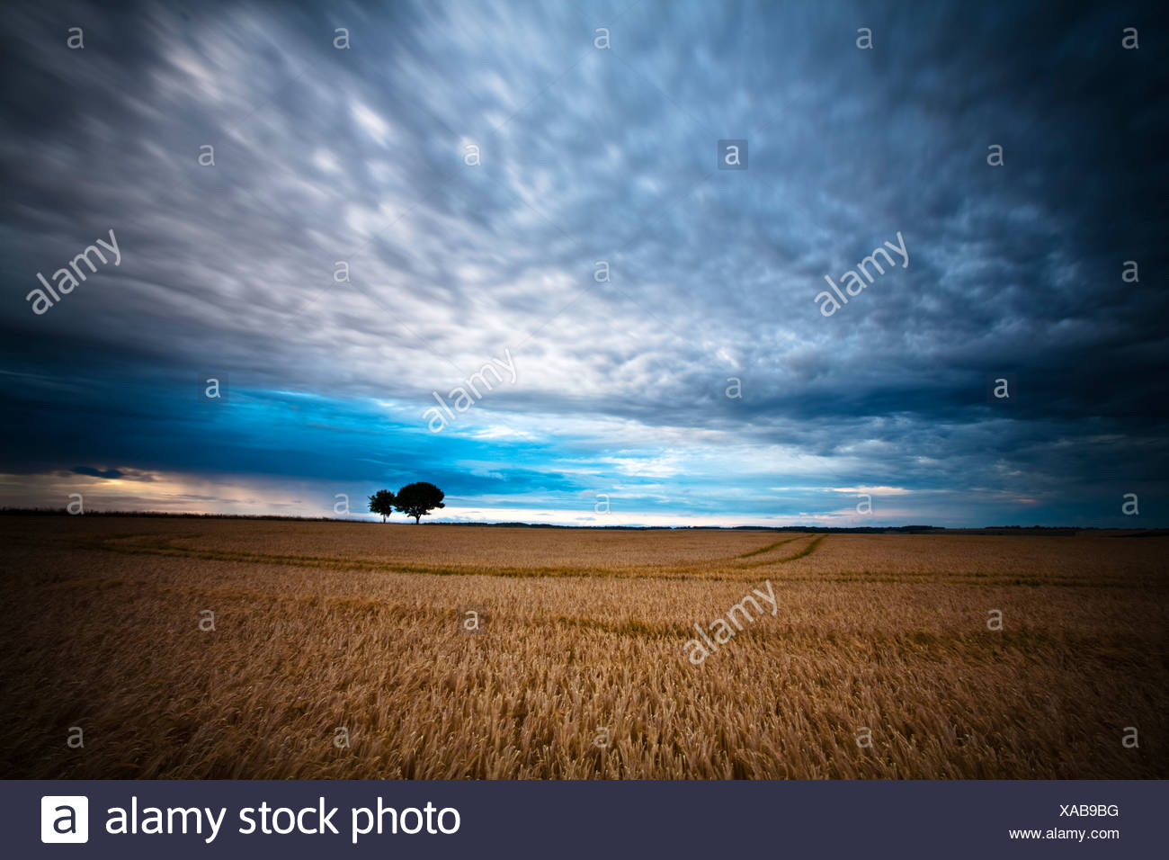 Evening light over the downs on the Ridgeway path at West Ilsley on the Berkshire and Oxfordshire border, Uk Stock Photo