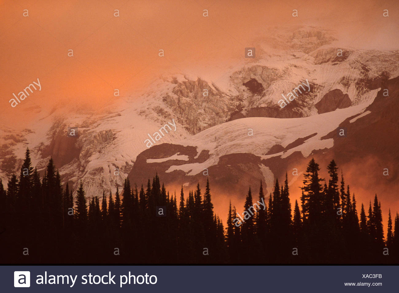 Pine trees towering above the sunset clouds with majestic Mt Rainier in the background Washington USA Stock Photo