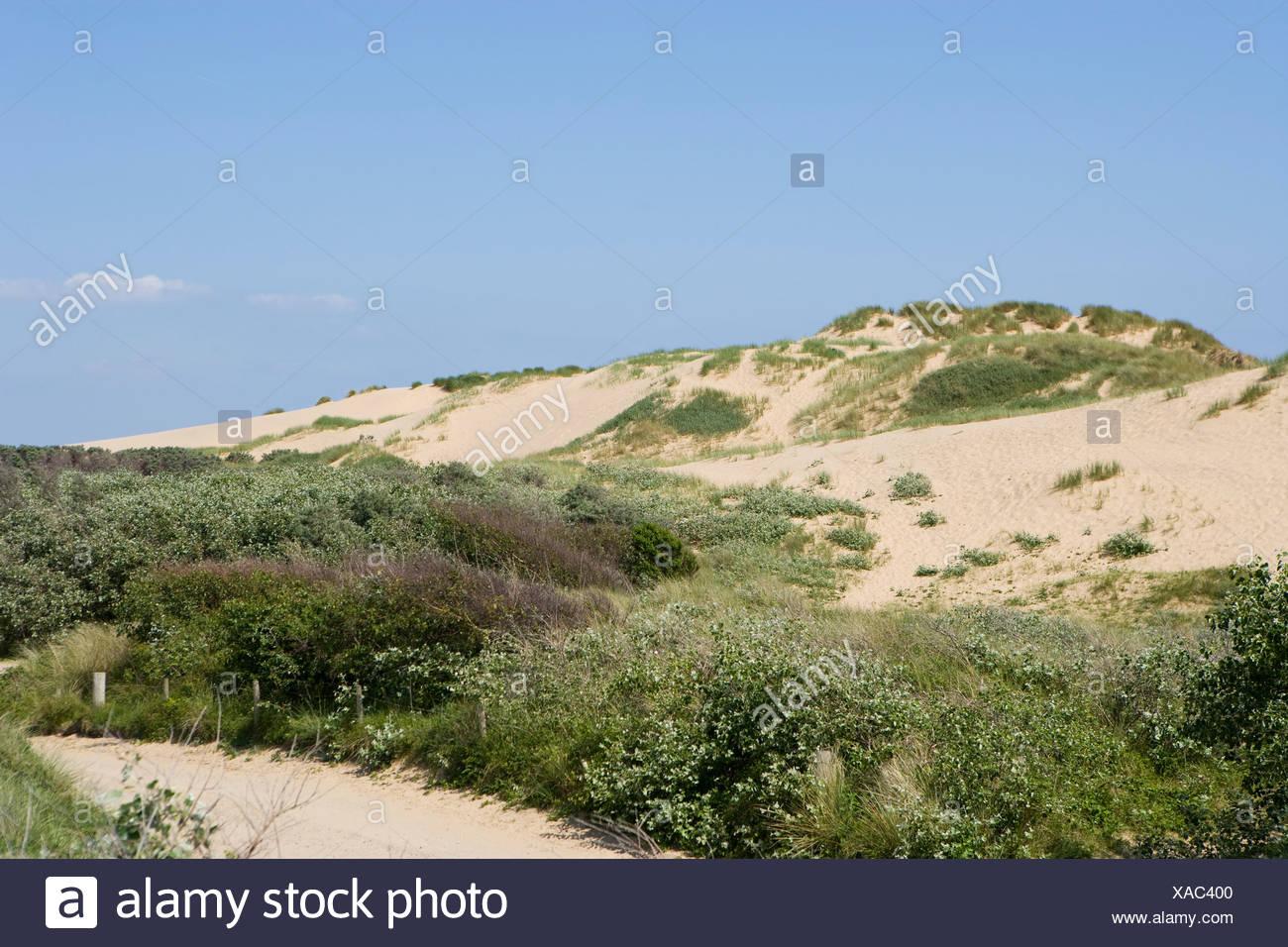 Large sand dunes at Formby, merseyside, UK - Stock Image