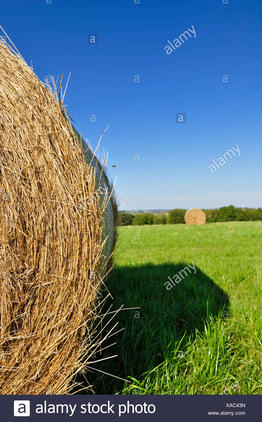 agriculture farming hay-clench - Stock Image