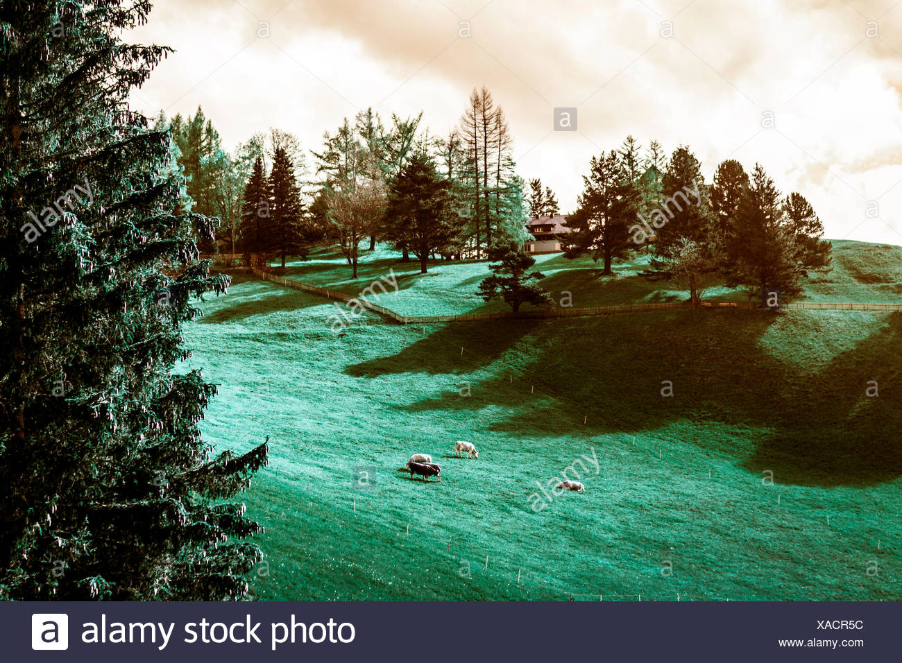 Liechtenstein, Vaduz Mountain, Farm - Stock Image