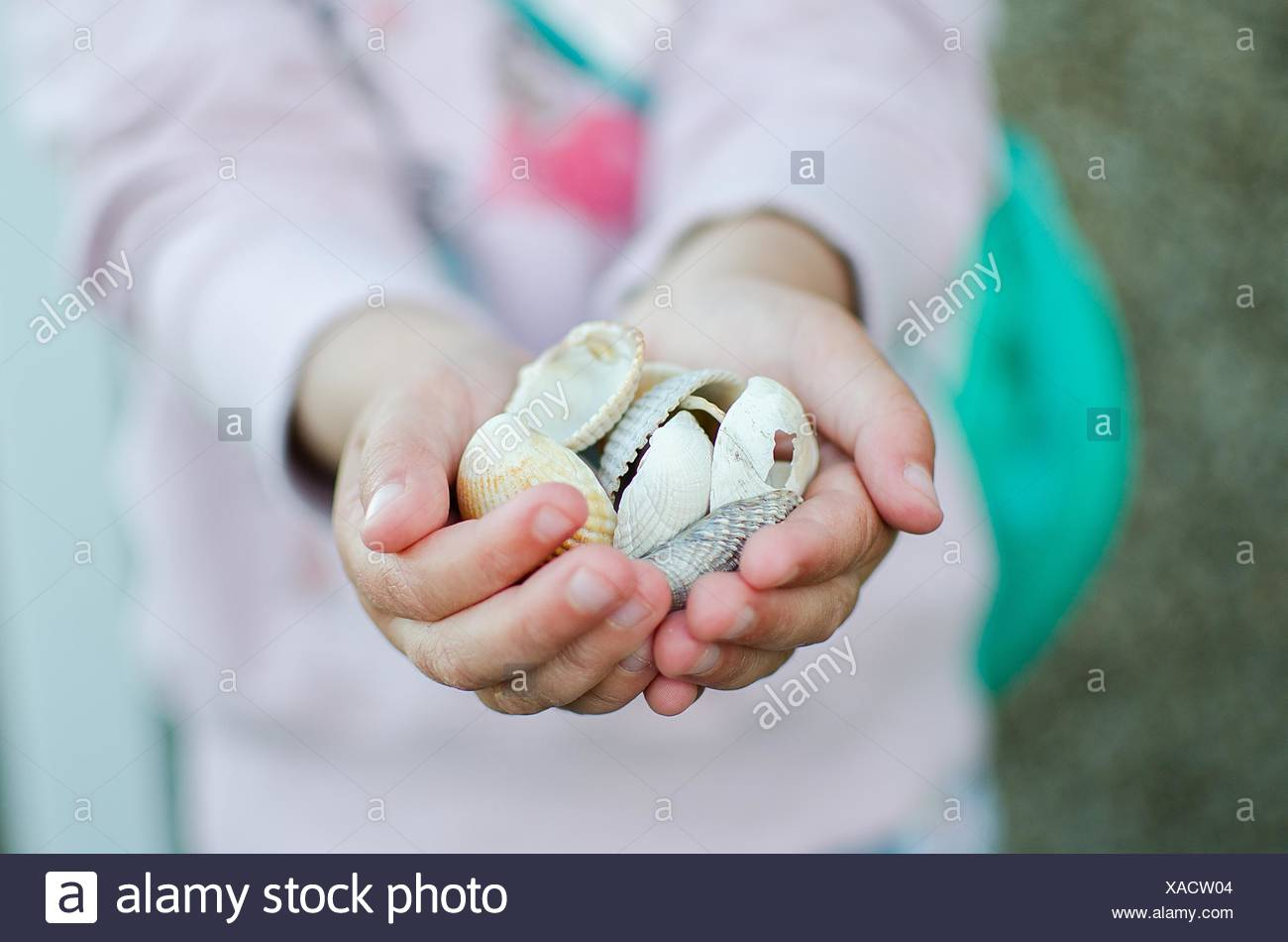 Little girl holding sea shells in her hands - Stock Image