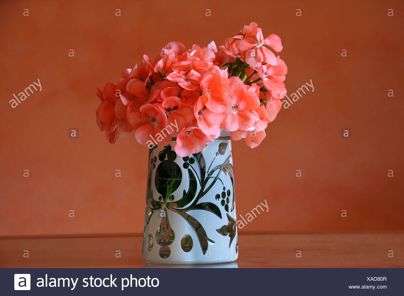 Hortensia Hydrangea Flowers Blooms Stock Photos & Hortensia ...