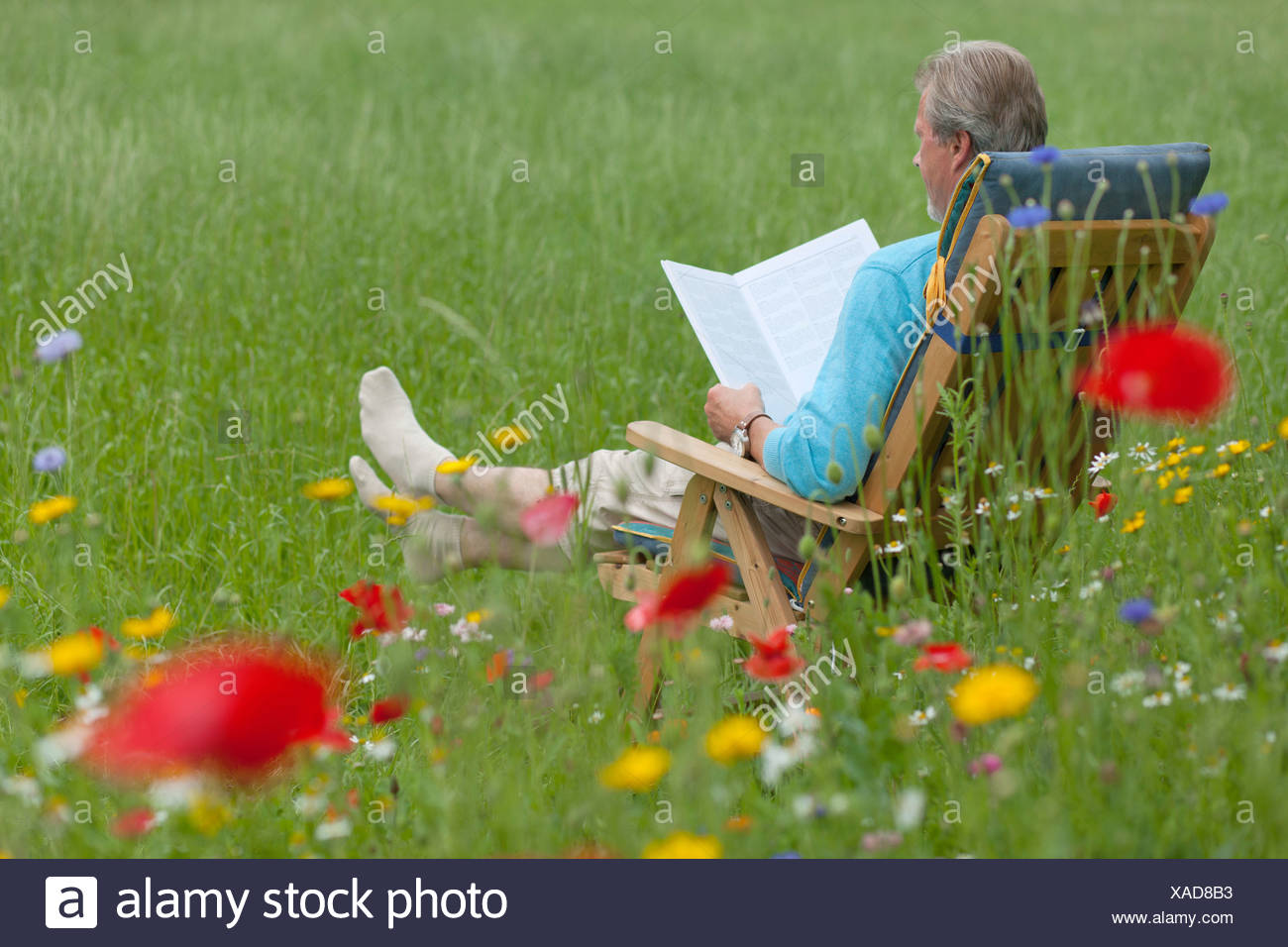 Elderly man readding in a garden chair on a flower meadow, Lower Saxony, Germany Stock Photo