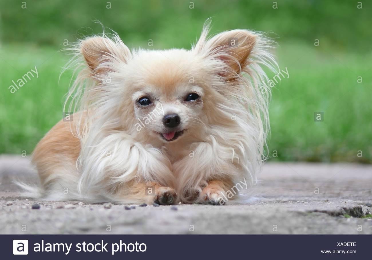 animals quadruped dog Stock Photo