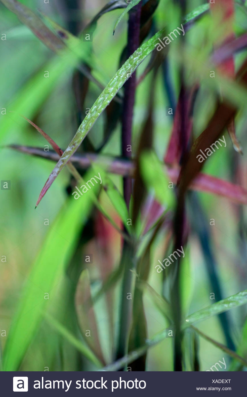 water drops on blades of grass - Stock Image
