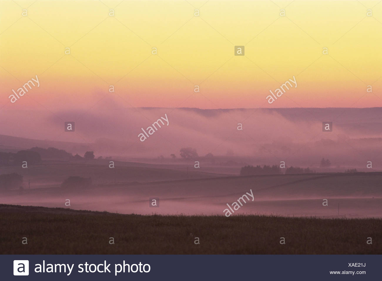 Great Britain, England, Northumbria, scenery, fog, red sky, Europe, Northumberland, width, distance, view, meadows, fields, hills, foggy, awfully, morning, atmospheric, pink, yellow, deserted, - Stock Image