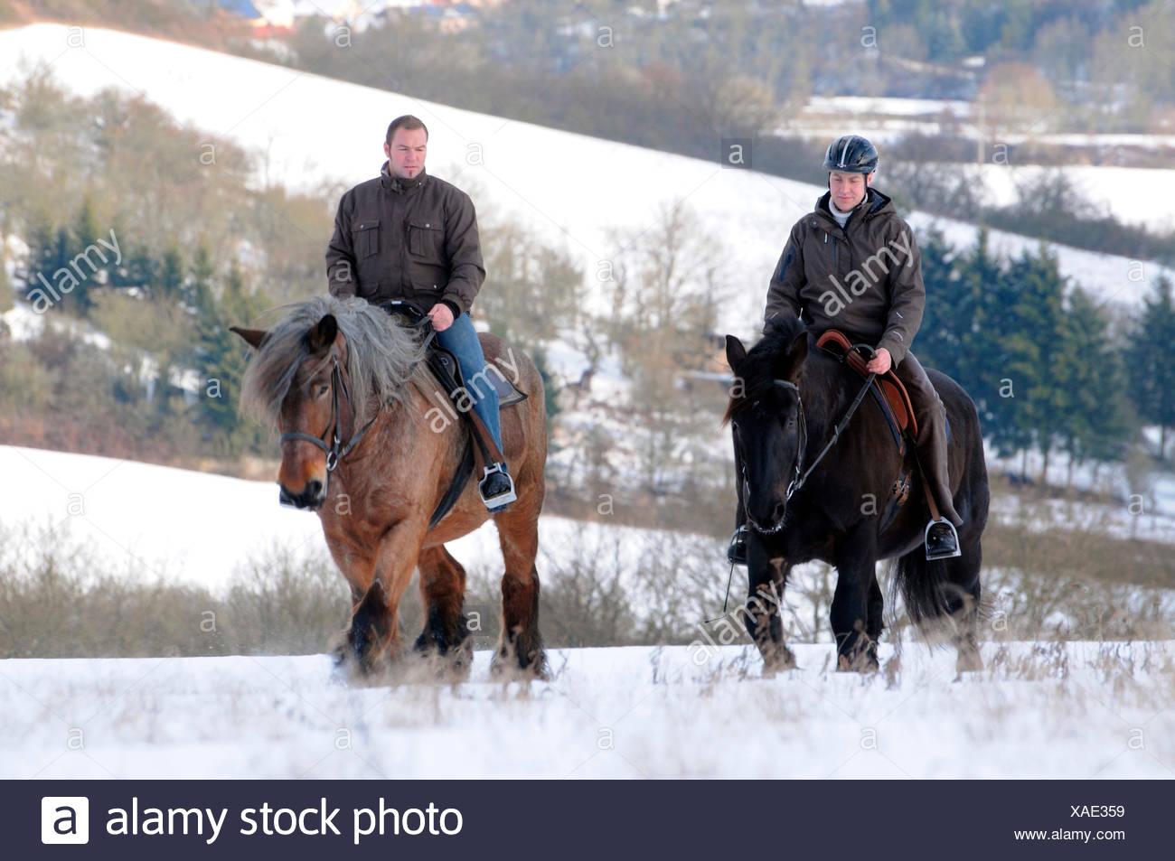 Trail Riding Men Riding Draft Horses Rider Draught Horse Stock Photo Alamy