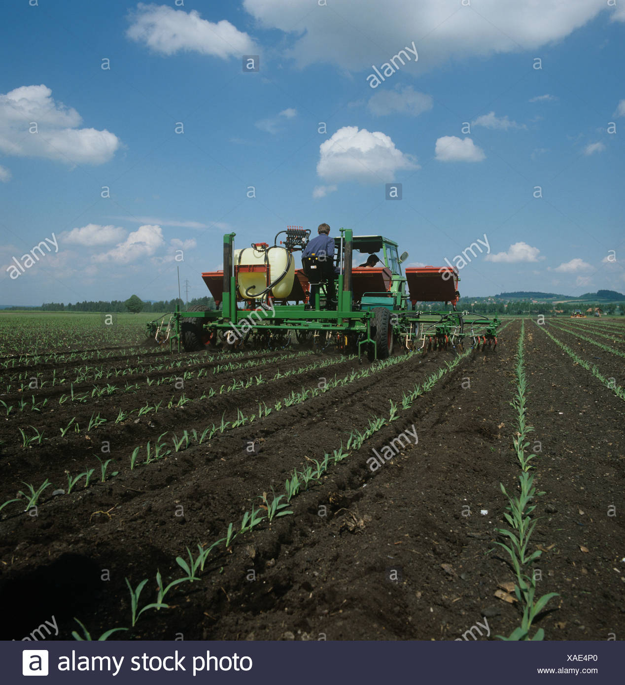 Machine for maize interrow cultivation spraying and fertilizing crop - Stock Image