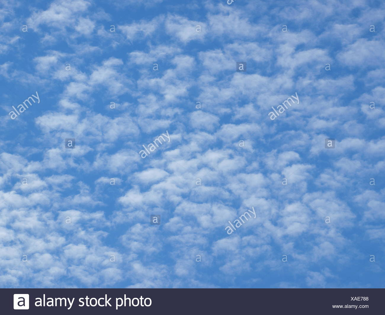 Fluffy clouds, Cirrocumulus - Stock Image