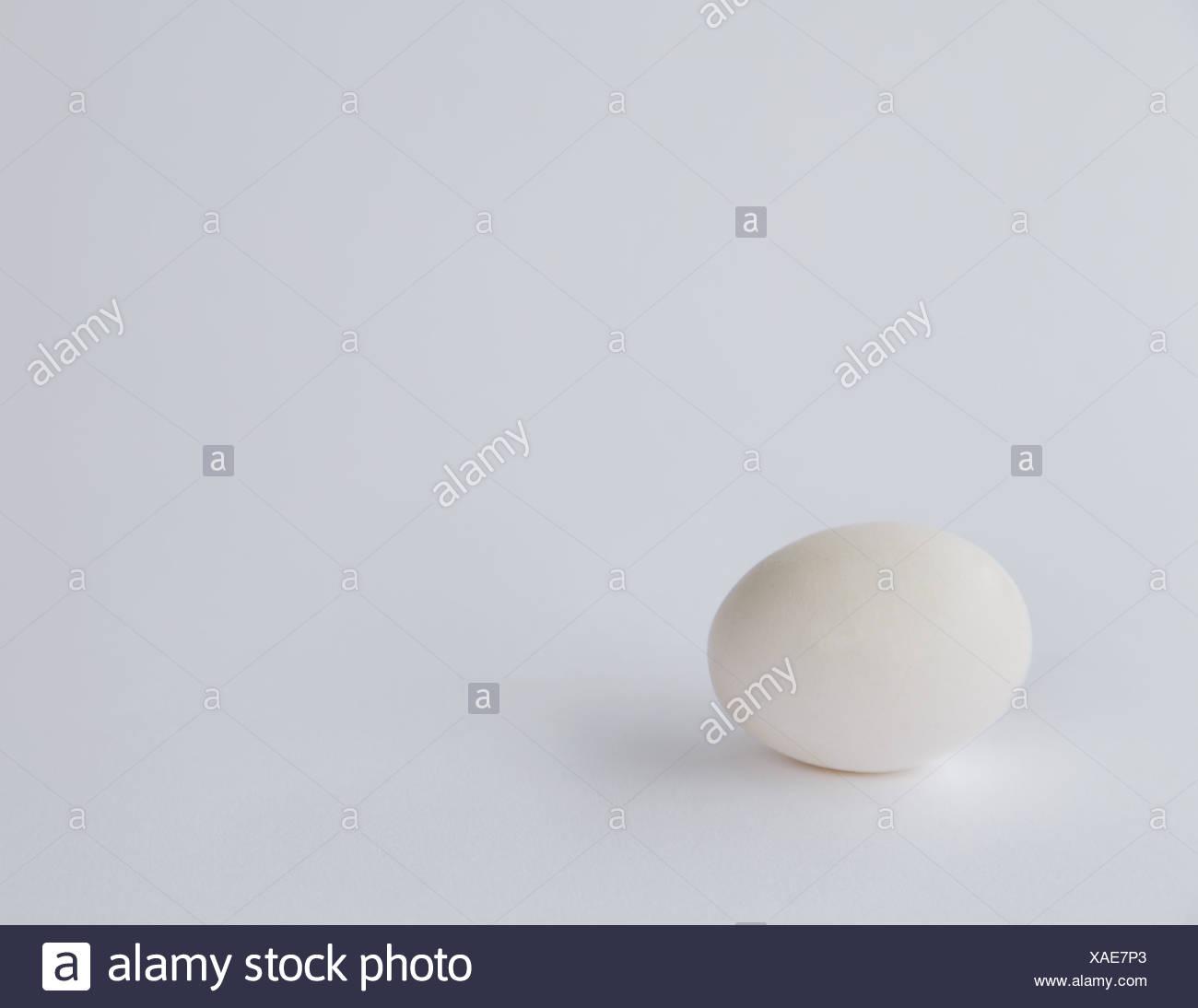 single free range organic egg with white shell - Stock Image