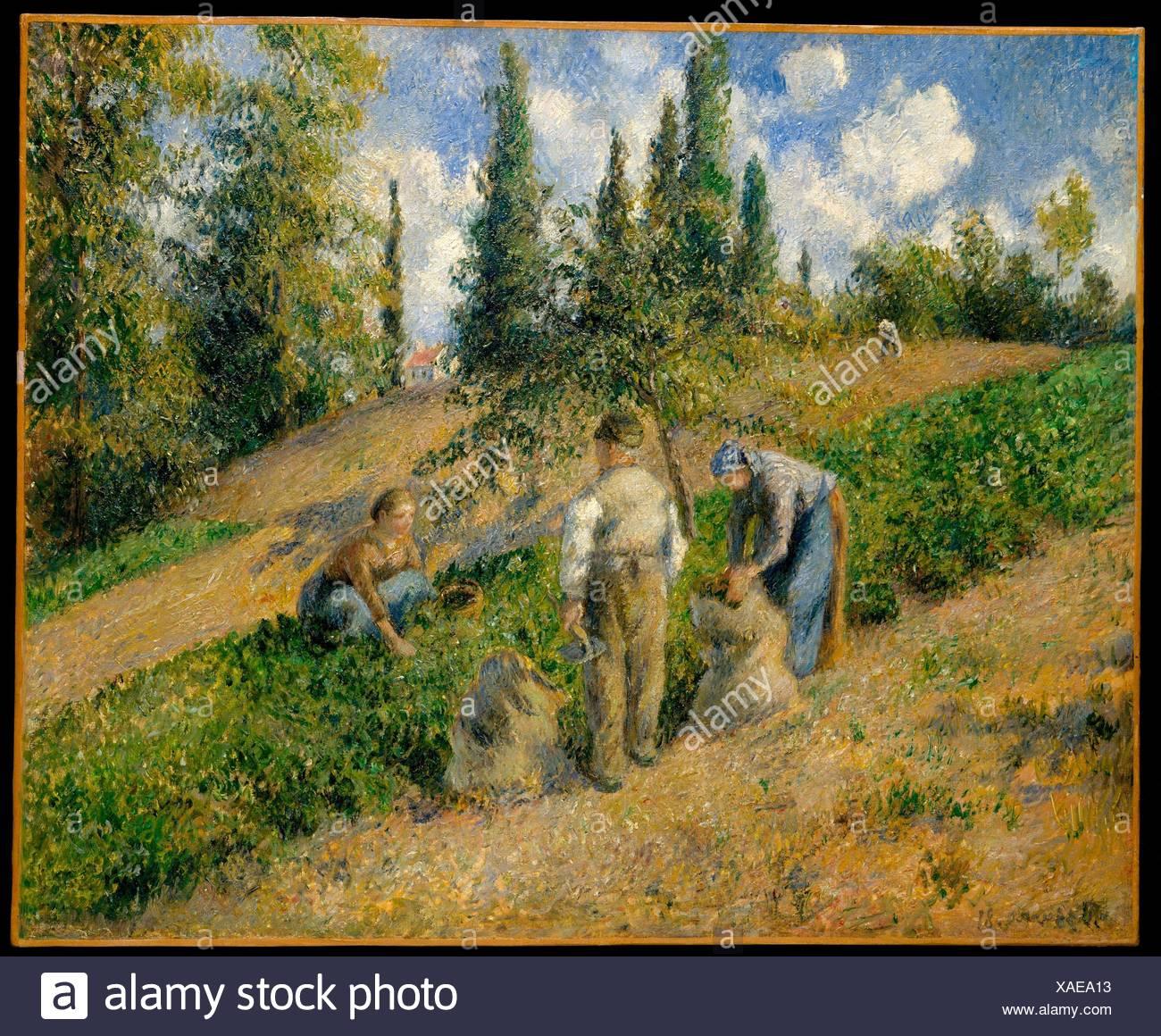 The Harvest, Pontoise (La Récolte, Pontoise). Artist: Camille Pissarro (French, Charlotte Amalie, Saint Thomas 1830-1903 Paris); Date: 1881; Medium: - Stock Image