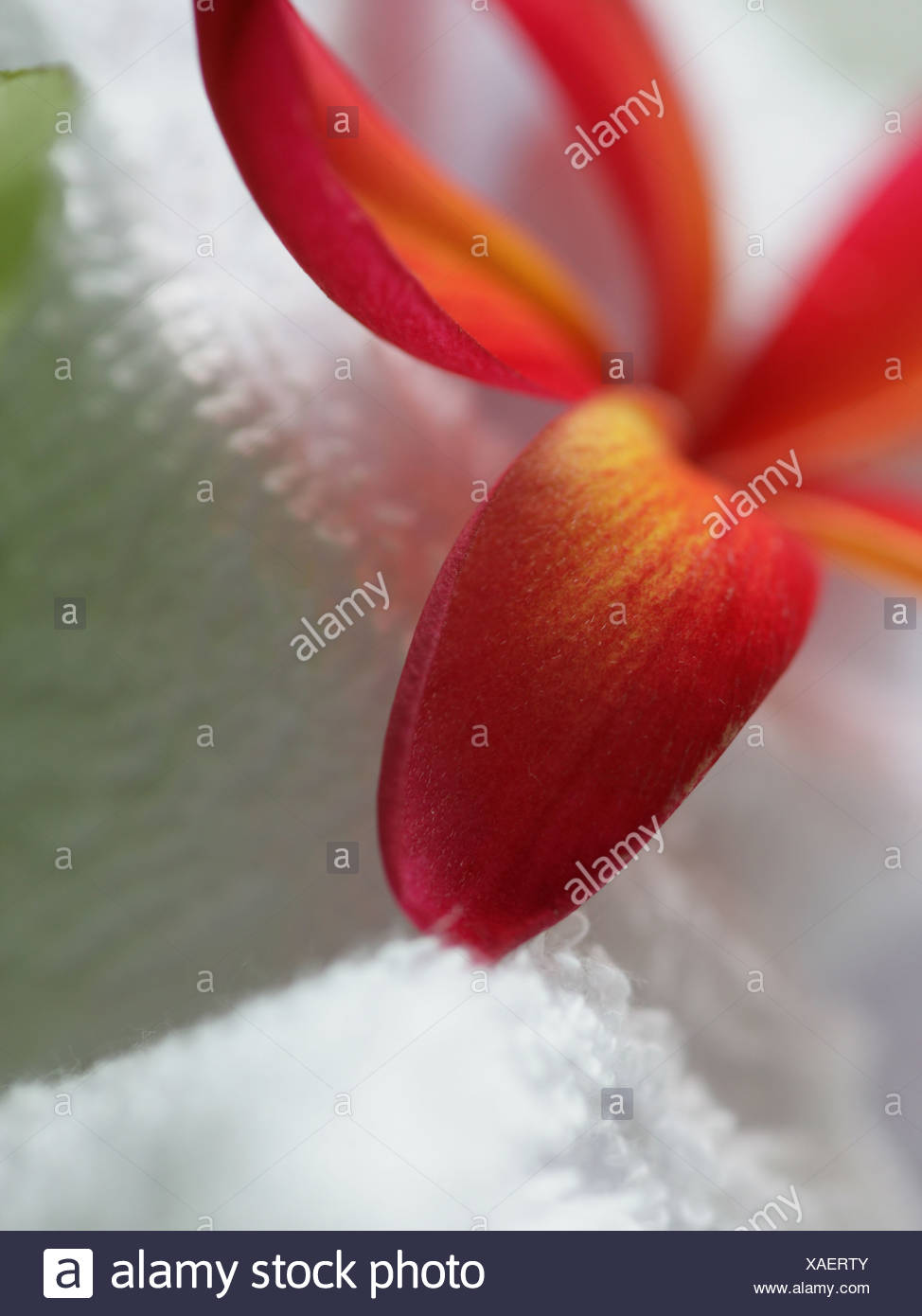 Close-up of a flower - Stock Image