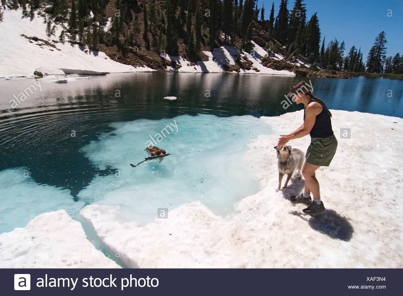 Dog fetching a stick in a lake, Lake Tahoe, Californian Sierra Nevada, California, USA - Stock Image