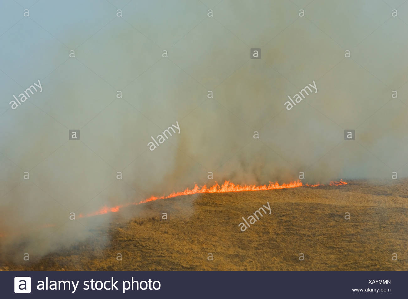 Aerial view of prairie grass fire Alberta Canada.. Dried winter grass ignites easily and fanned by wind quickly spreads across p - Stock Image