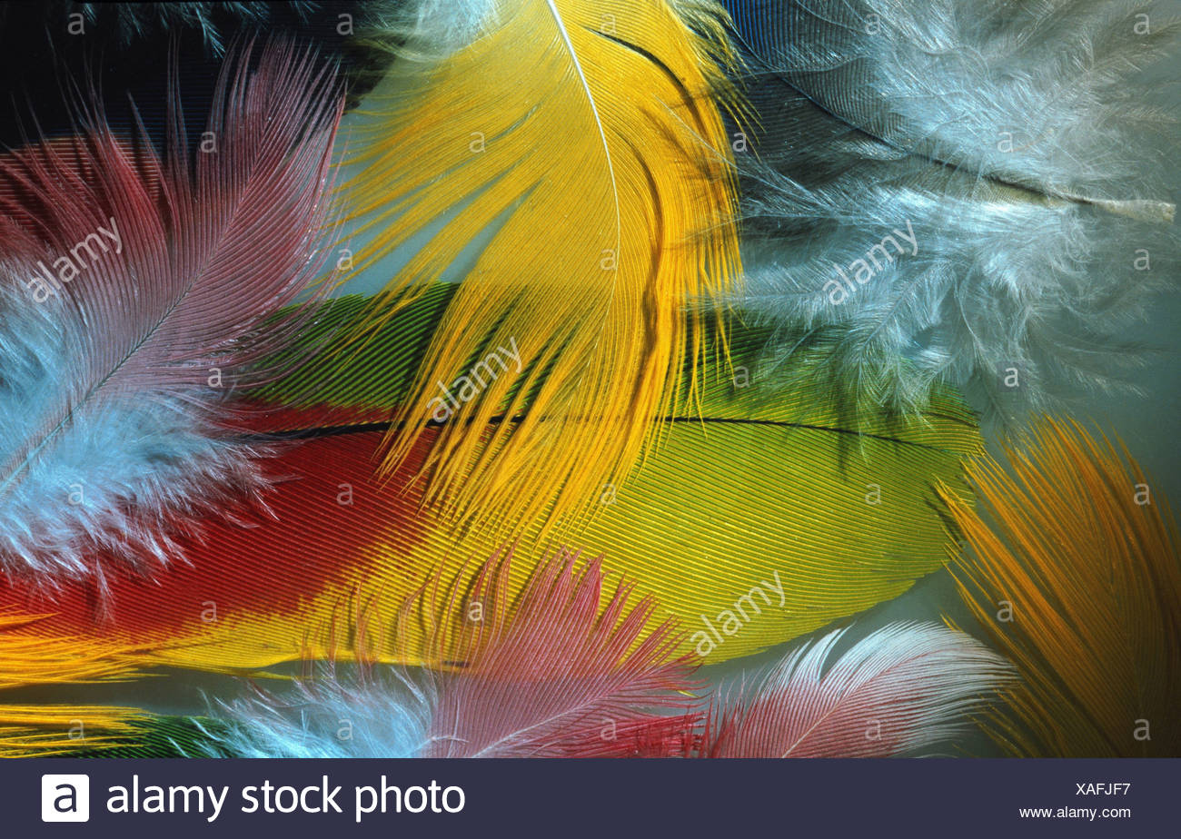 parrot, feathers, arranged - Stock Image