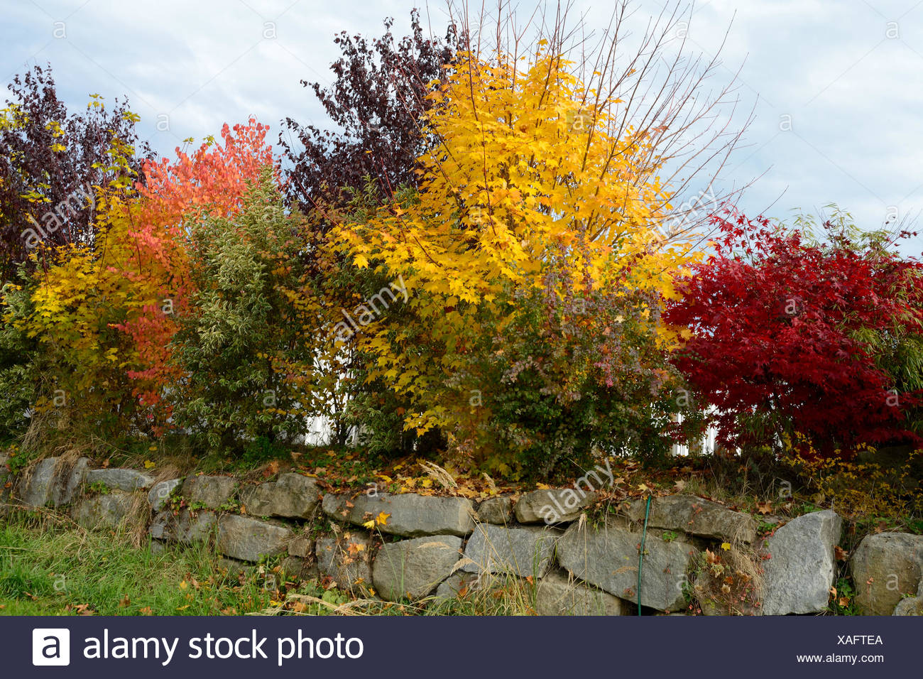 autumn shrubs for privacy Stock Photo