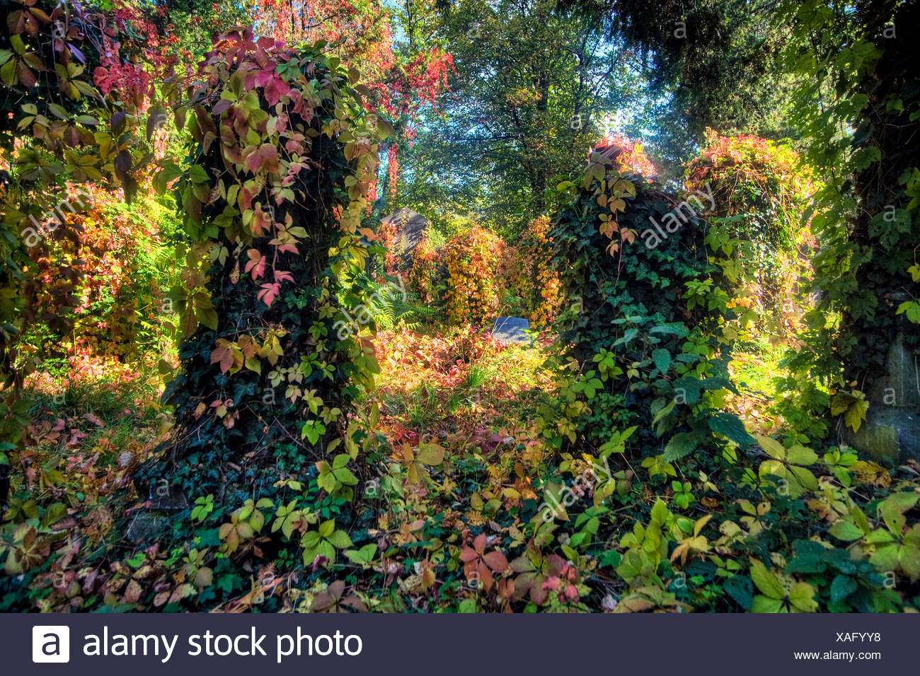 autumn at the central cemetery, overgrown gravestones, Austria, Vienna - Stock Image