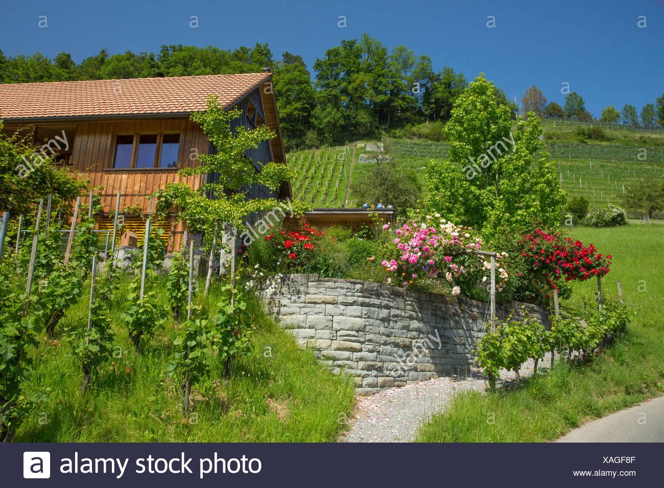 houses, homes, Wienacht-Tobel, canton, Appenzell, Ausserrhoden, Lutzenberg, Switzerland, Europe, - Stock Image