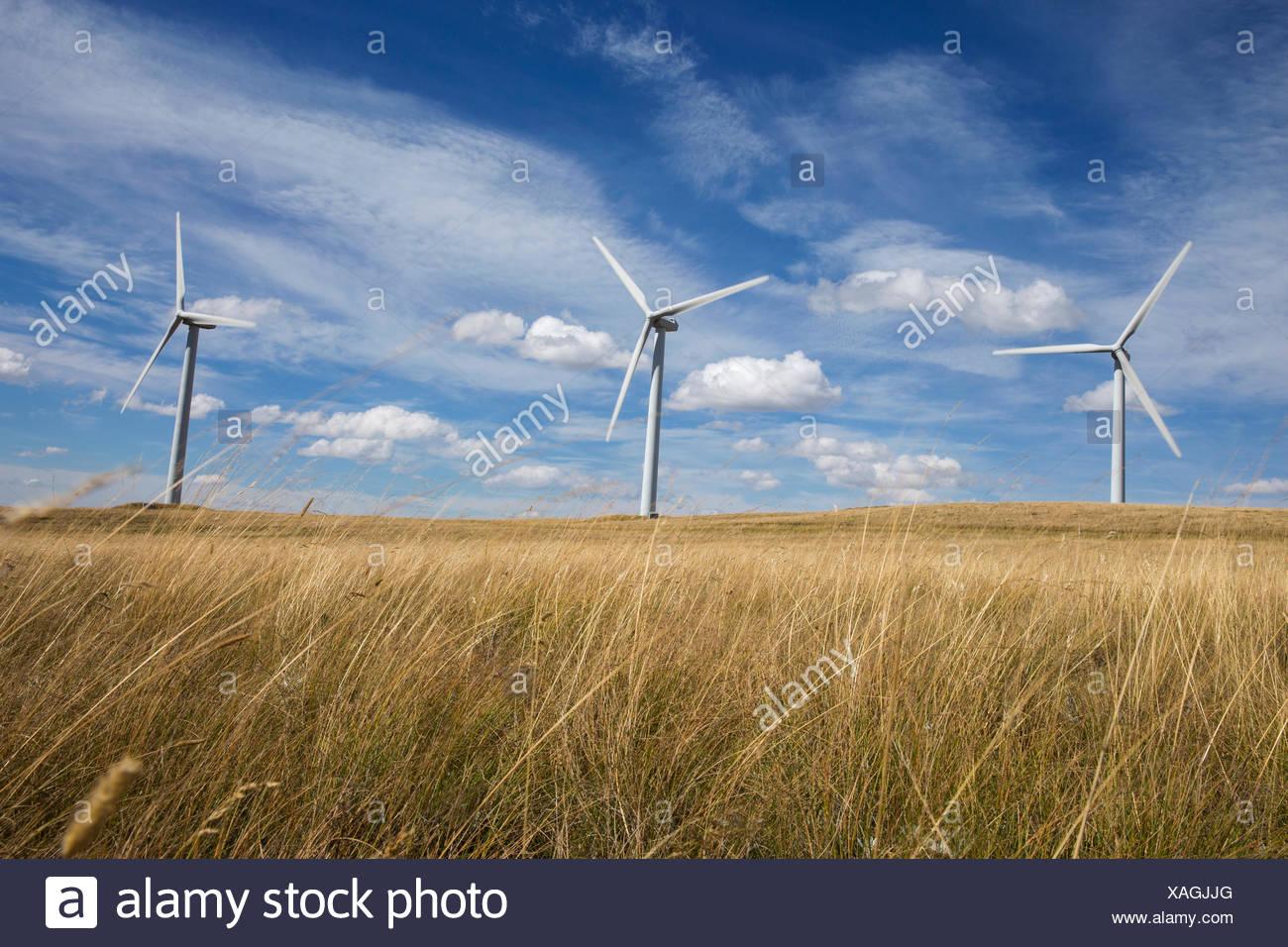 Wind turbines in sunny rural field - Stock Image