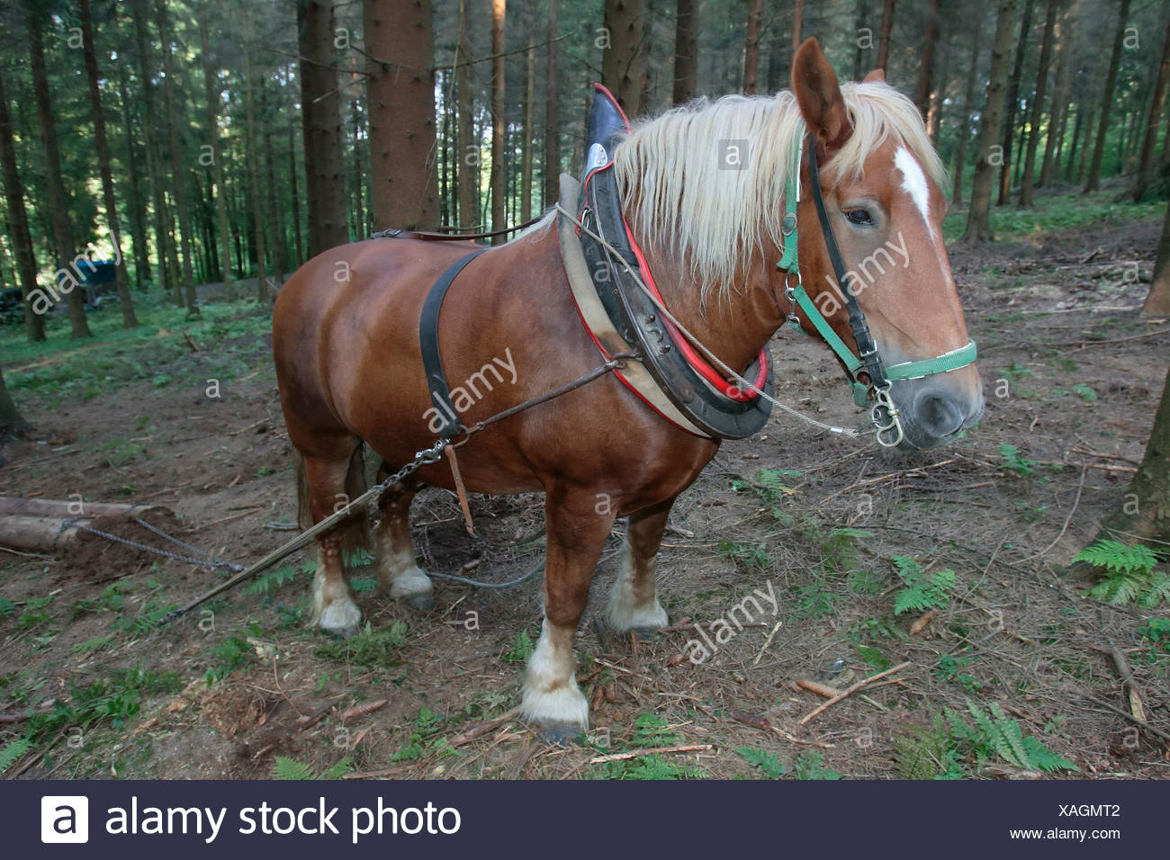Workhorse at work - Stock Image