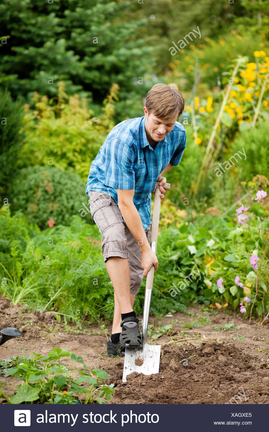 man when digging in the garden - Stock Image