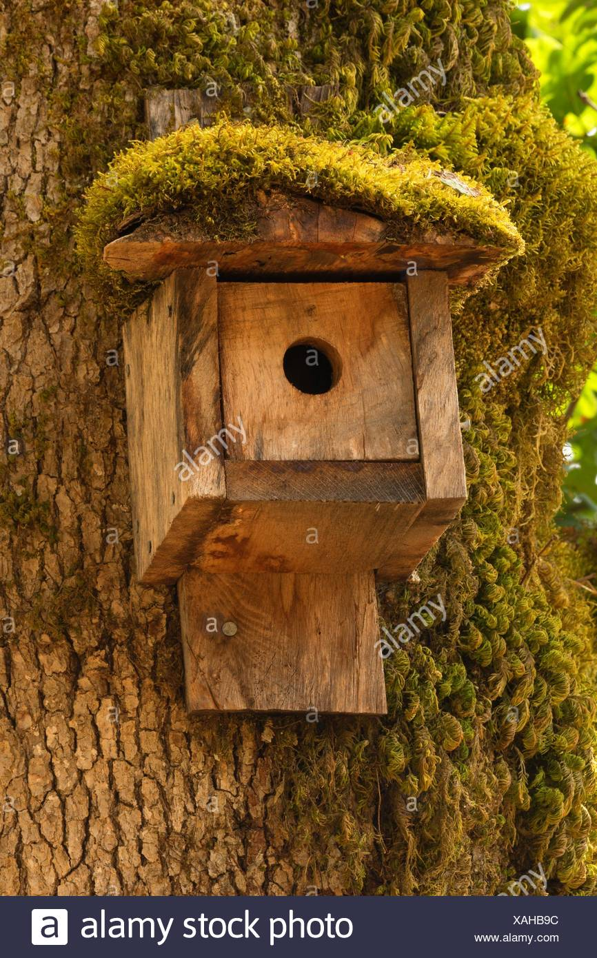 Birdhouse, Miller Woods Conservation Area, Yamhill County, Oregon. - Stock Image