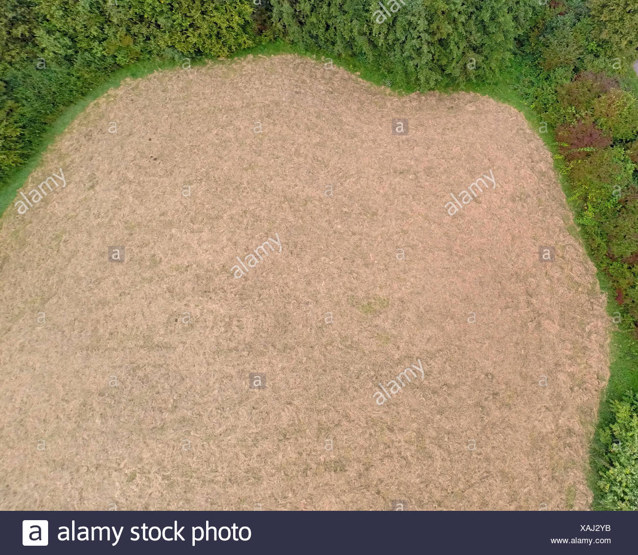 aerial view to mowed maedow - Stock Image