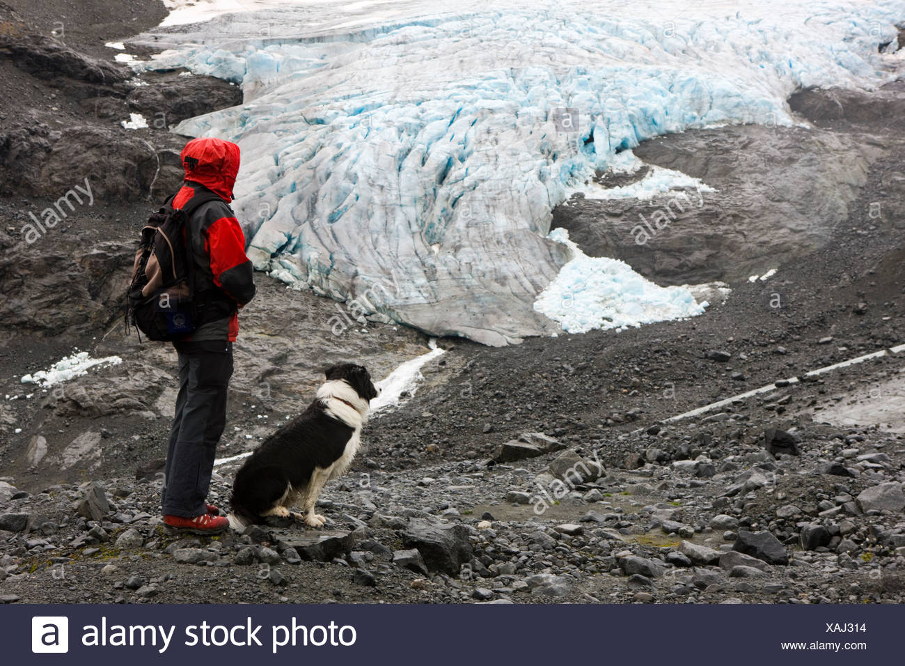 Hiker with a Border Collie looking at a glacier tounge, Norway, Scandinavia, Europe - Stock Image